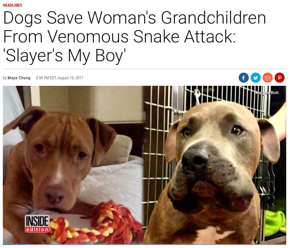 INSIDE edition, Slayer Saves Woman's Grandchidren