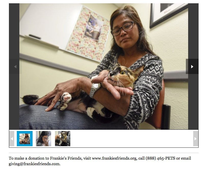 TAMPA BAY TIMES, Tampa Woman Sees Surviving Cat as Gift After Losing Six Pets to House Fire