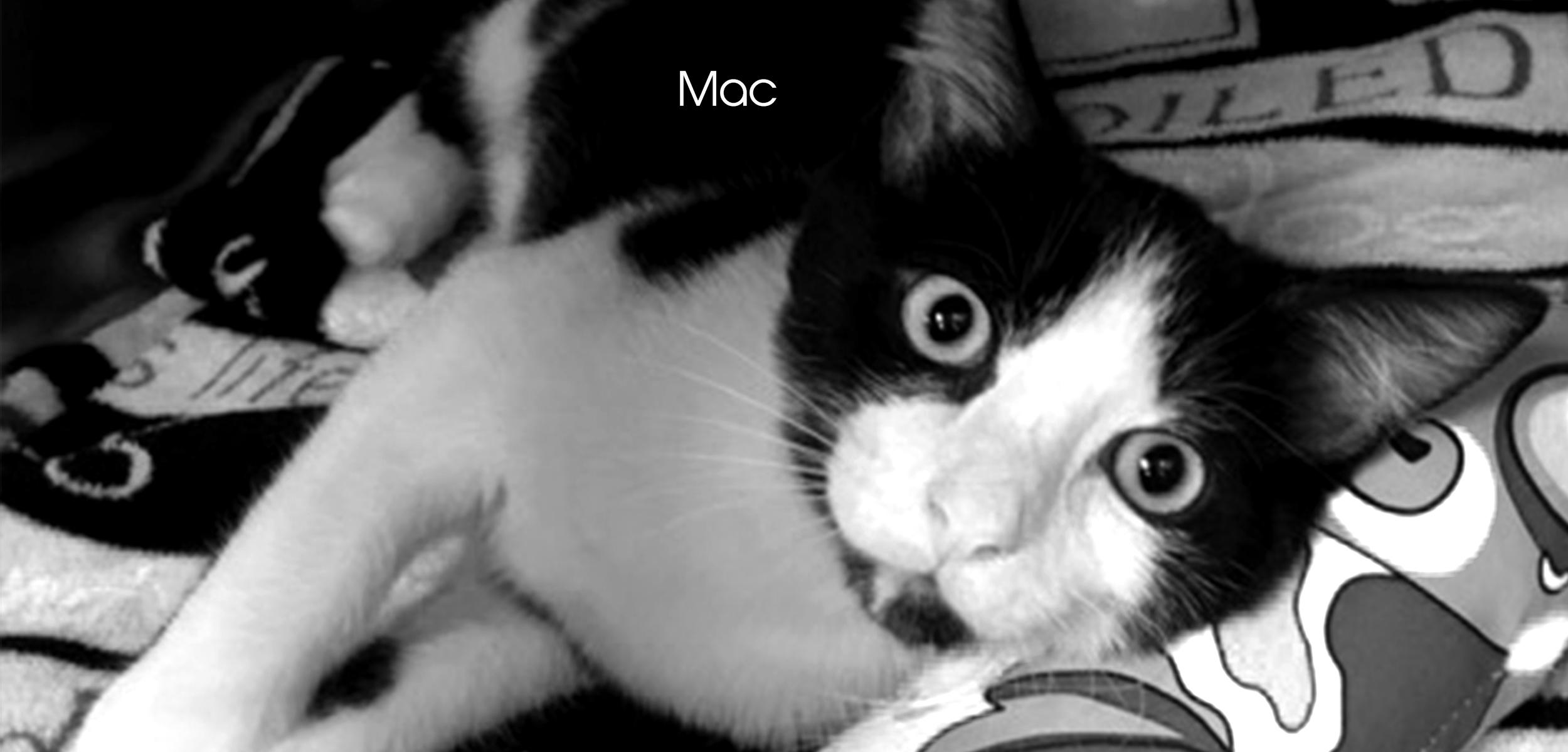 Mac FF slider images for website.jpg