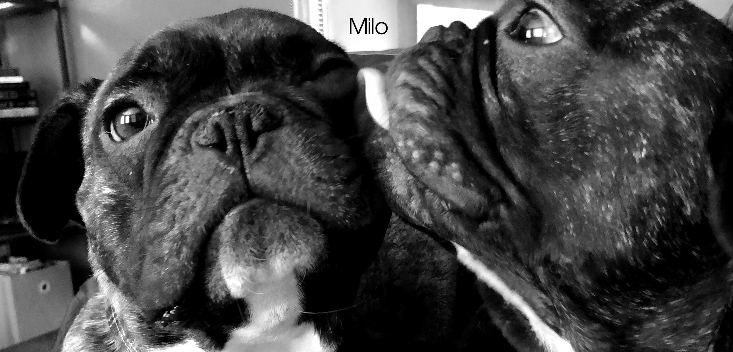 Milo FF slider images for website.jpg