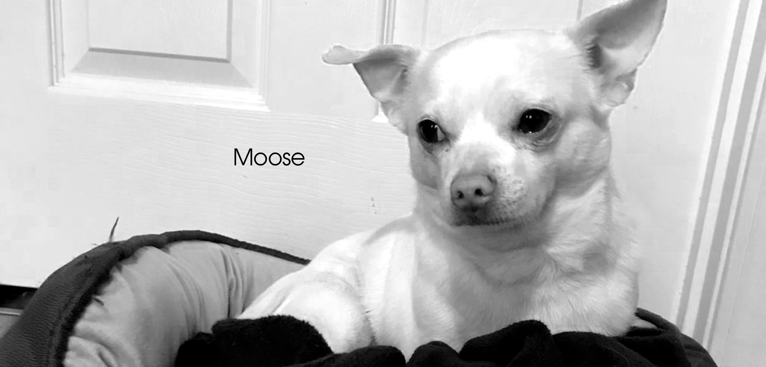 Moose FF slider images for website.jpg