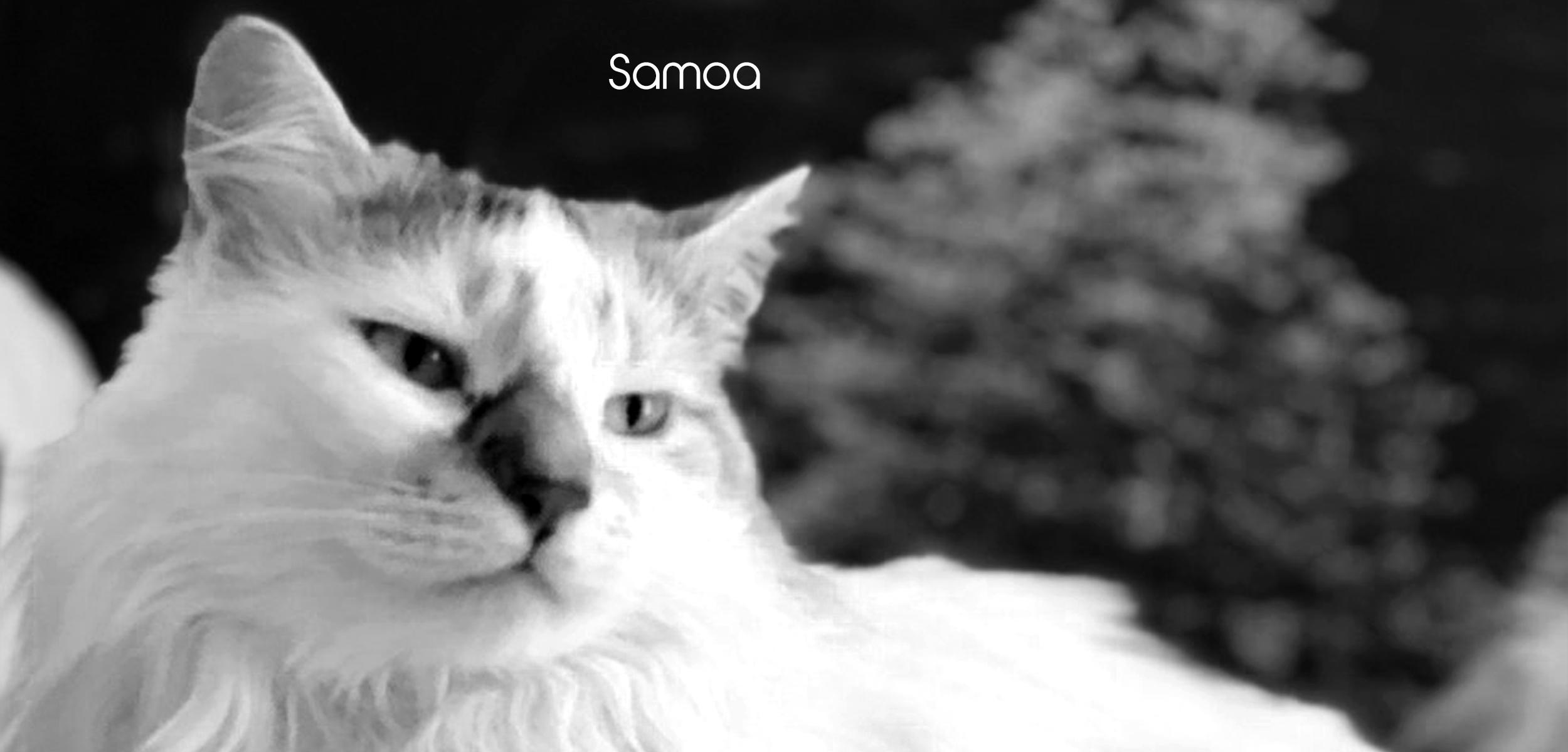 Samoa FF slider images for website.jpg
