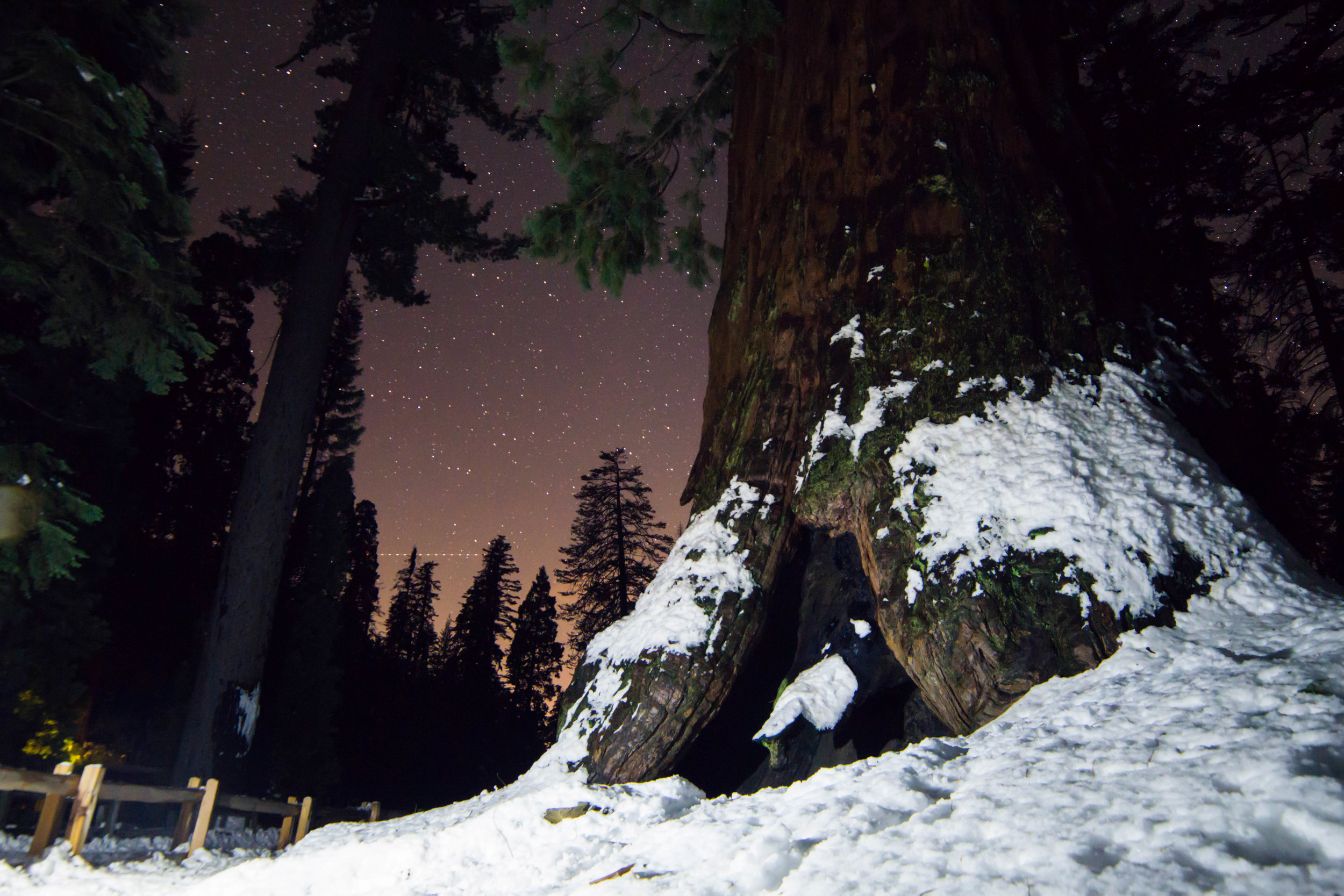 A night hike through Grant Grove offered an eery seclusion with the Robert E. Lee tree towering over us as it climbed into the star scattered sky.