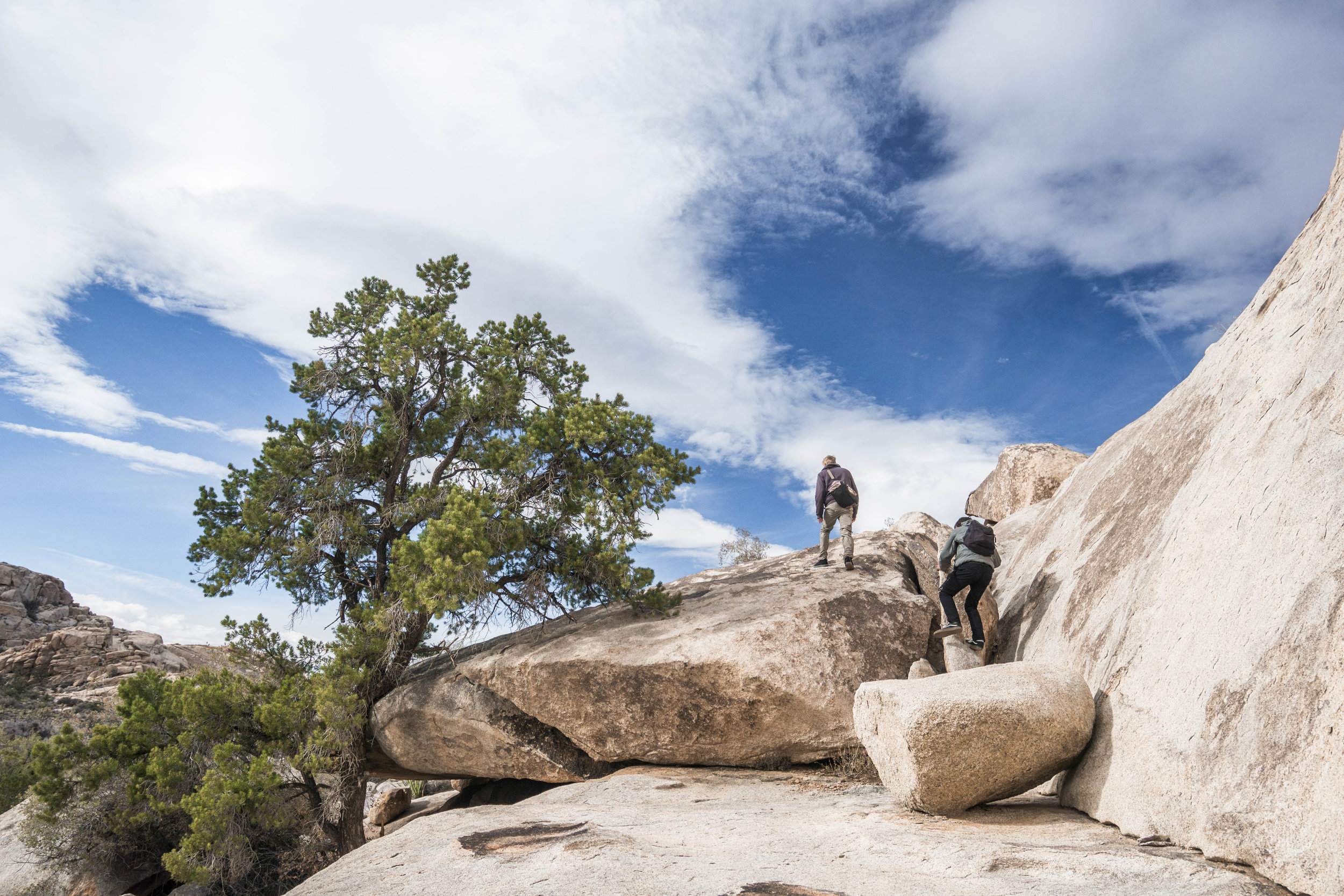 Joshua Tree isn't the first place you'd think of to have Pine Trees, but the rocks filter enough water over isolated patches of soil for them to survive the brutal heat.