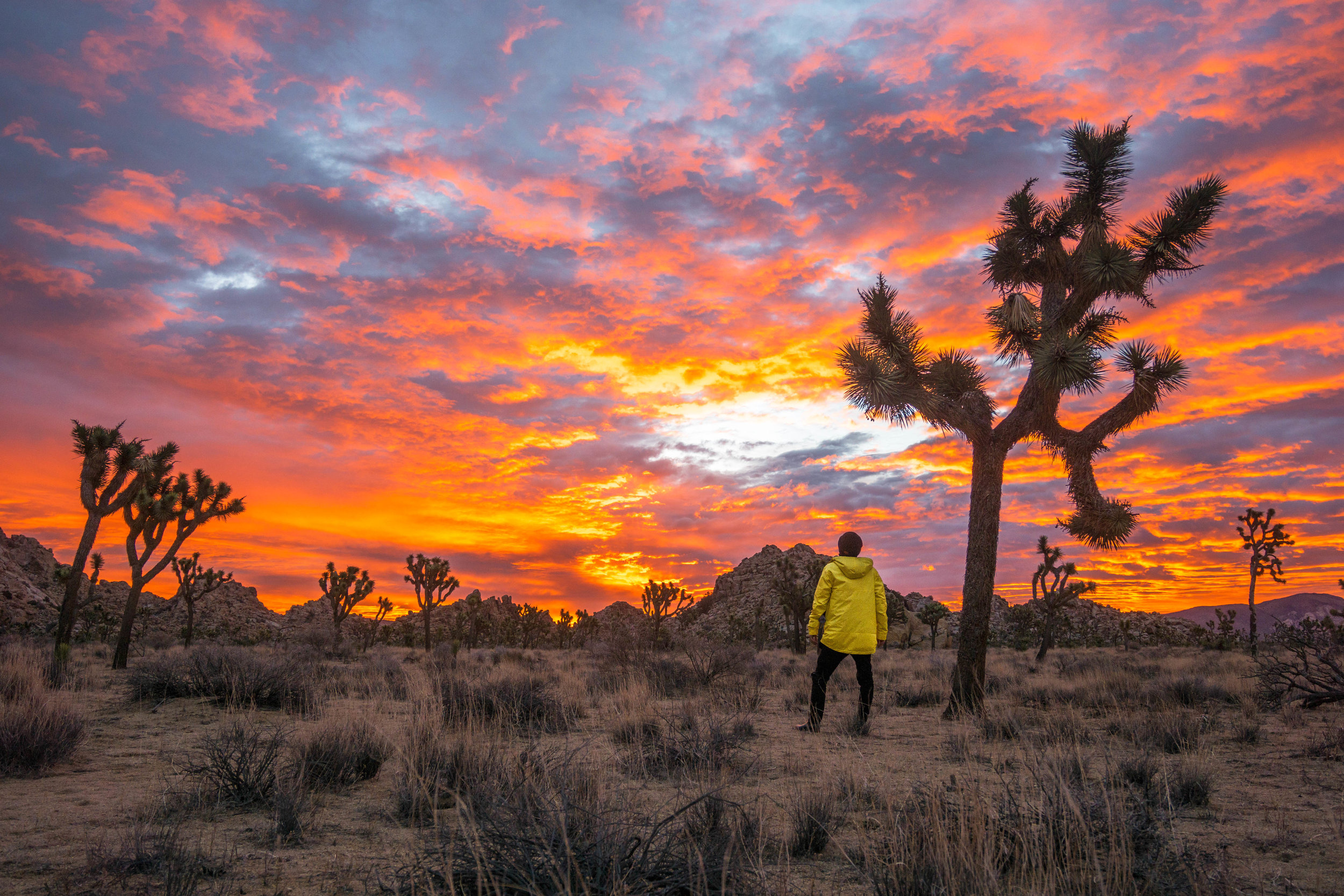 As the sky continued to burn like a colorful inferno, we wandered in amazement among Joshua Tree's alien landscape.