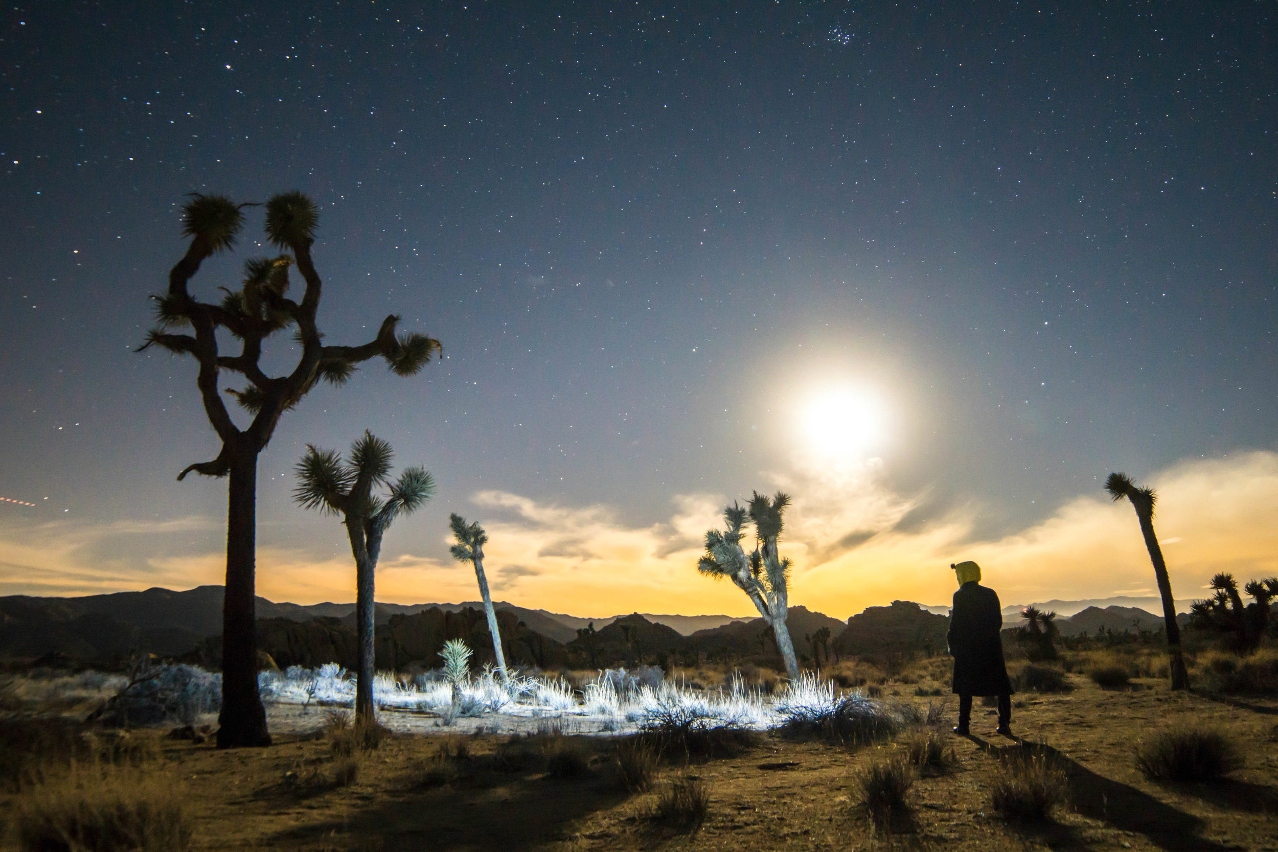 This is the best time to experience this foreign world; the funky silhouettes of the Joshua Trees reaching for the vast starry sky above appear truly extraterrestrial.