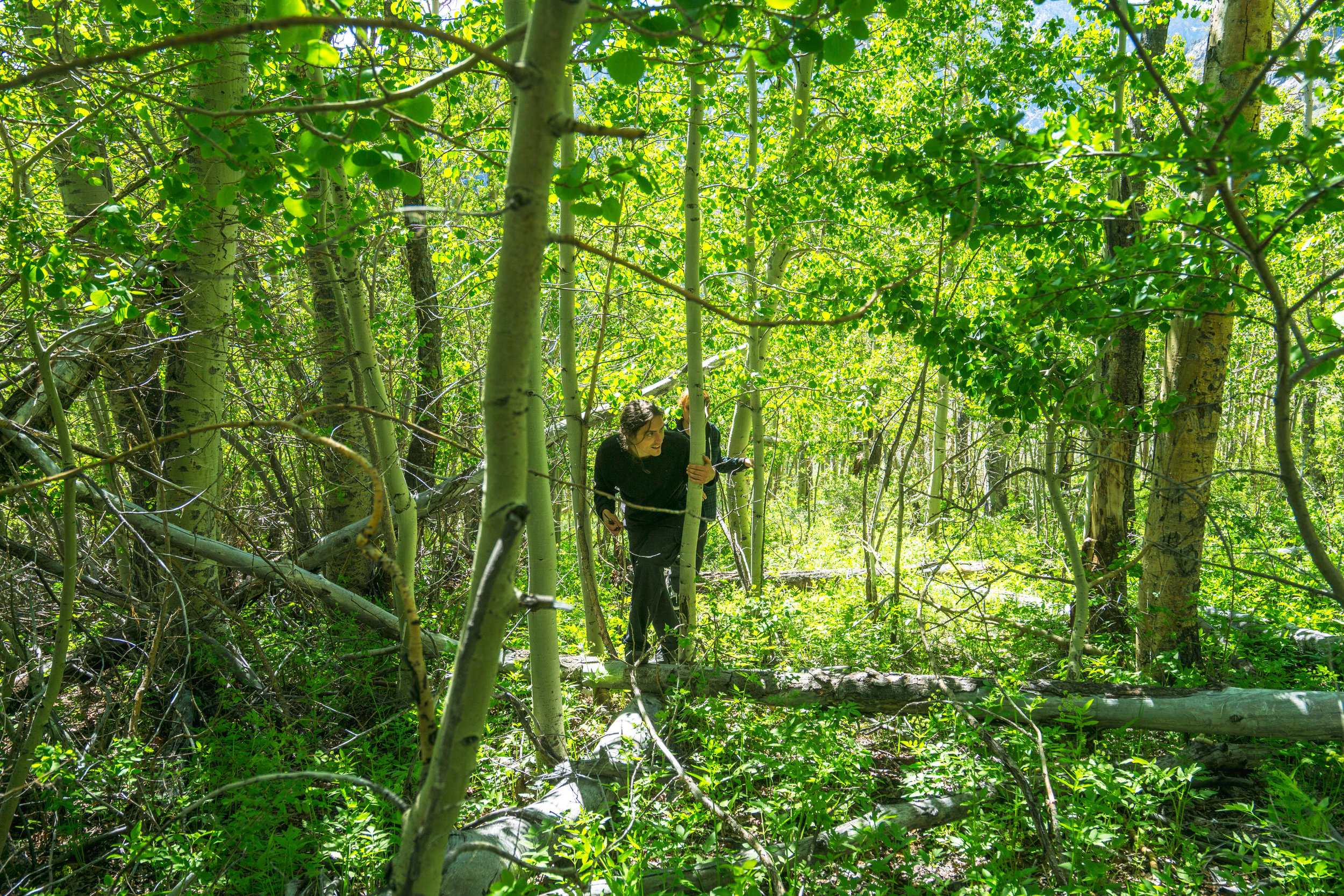 With the rest of the crew now awake, we head off to a dense strip of Cottonwoods running along a mountainside creek.