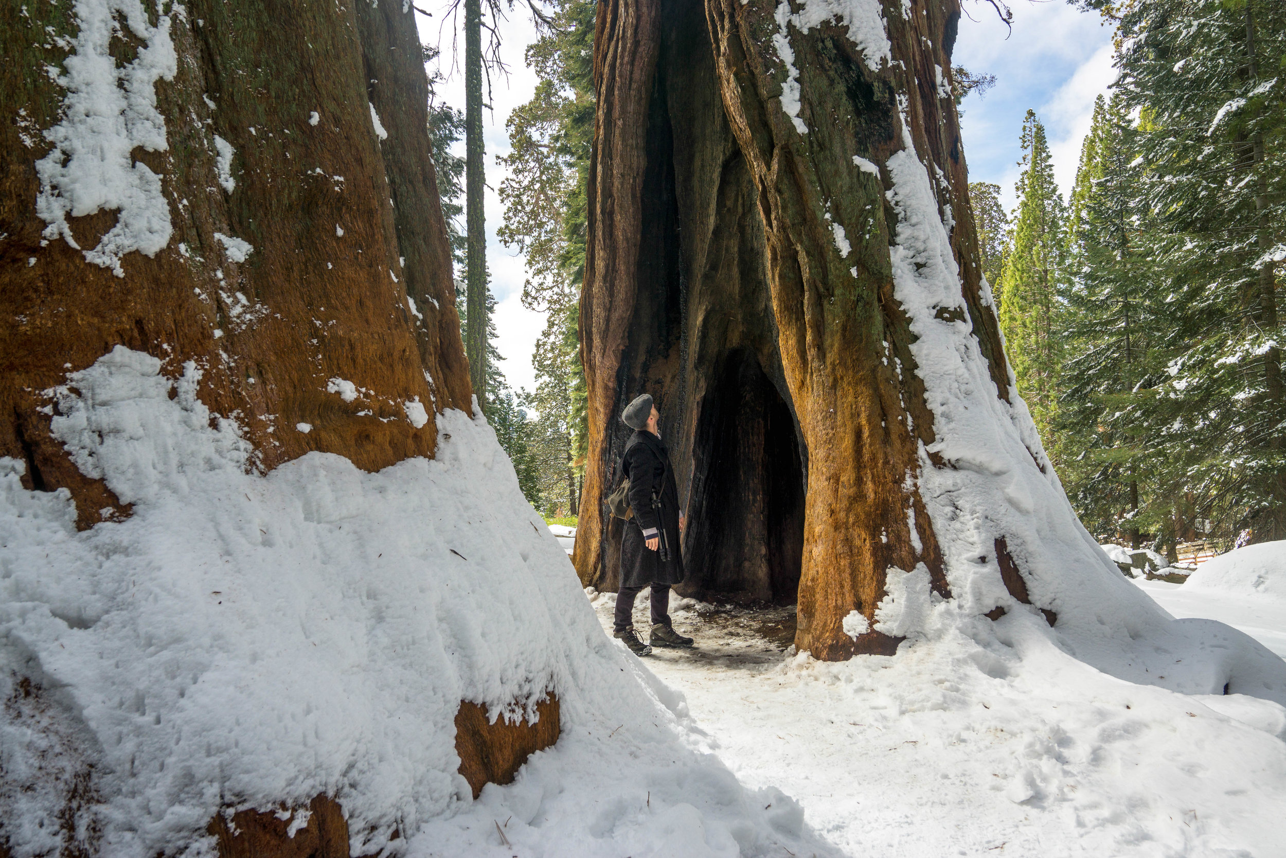 We wrap up our hike with one last grand view. Fittingly two sequoias stand like pillars of a gateway guiding our exit.