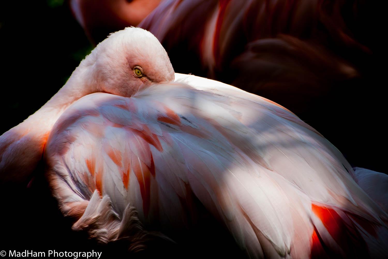 One Flamingo