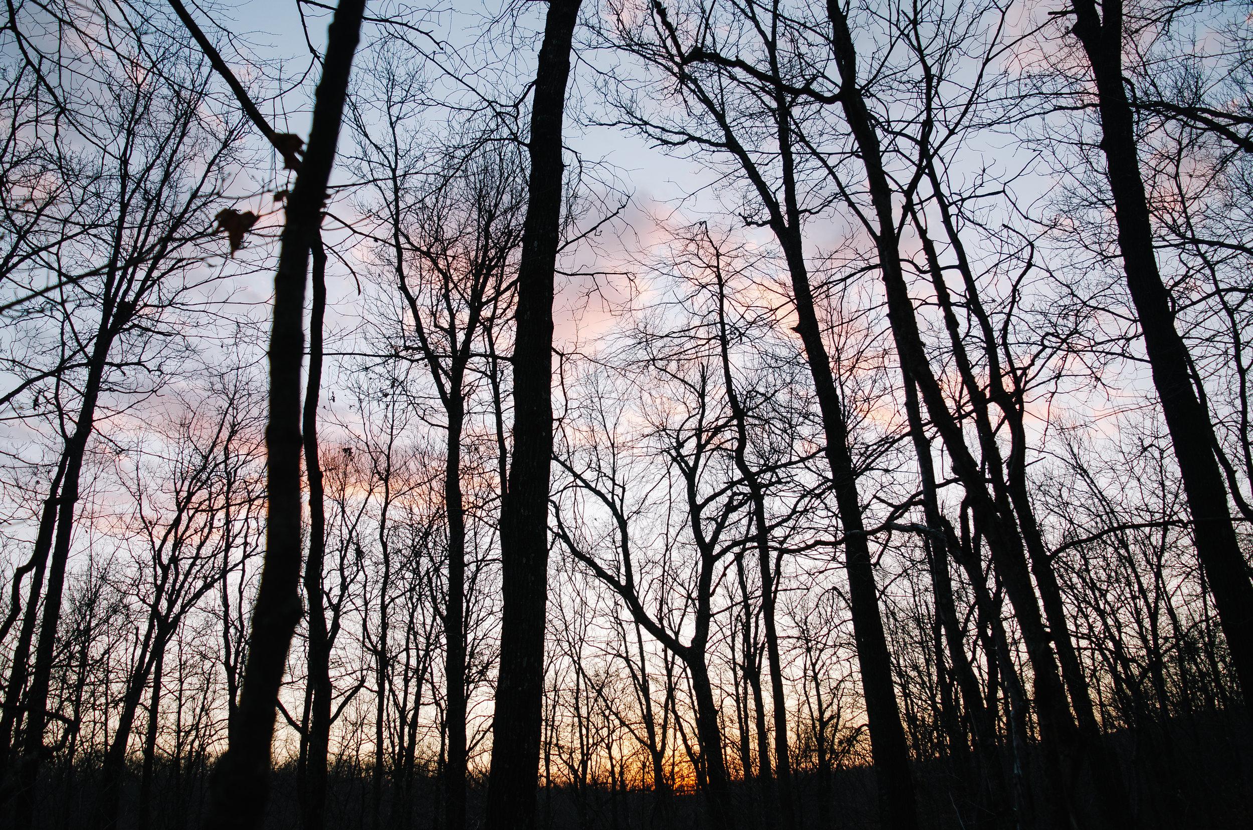 Last light on the trail