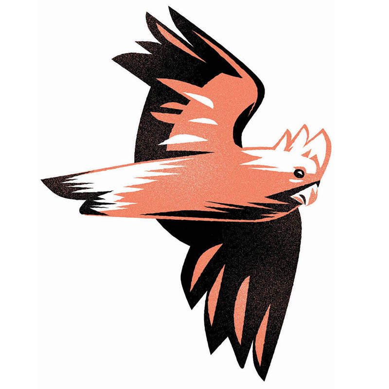 Galah Flying-Dean Gorissen Illustration.jpg
