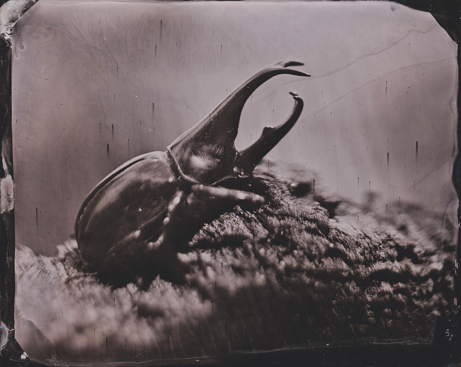Beetle 1 smaller.jpg