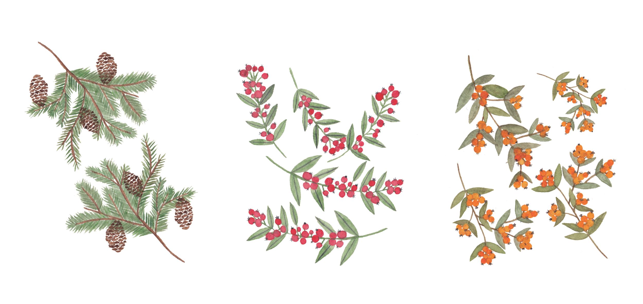 Winter+Plants.jpg