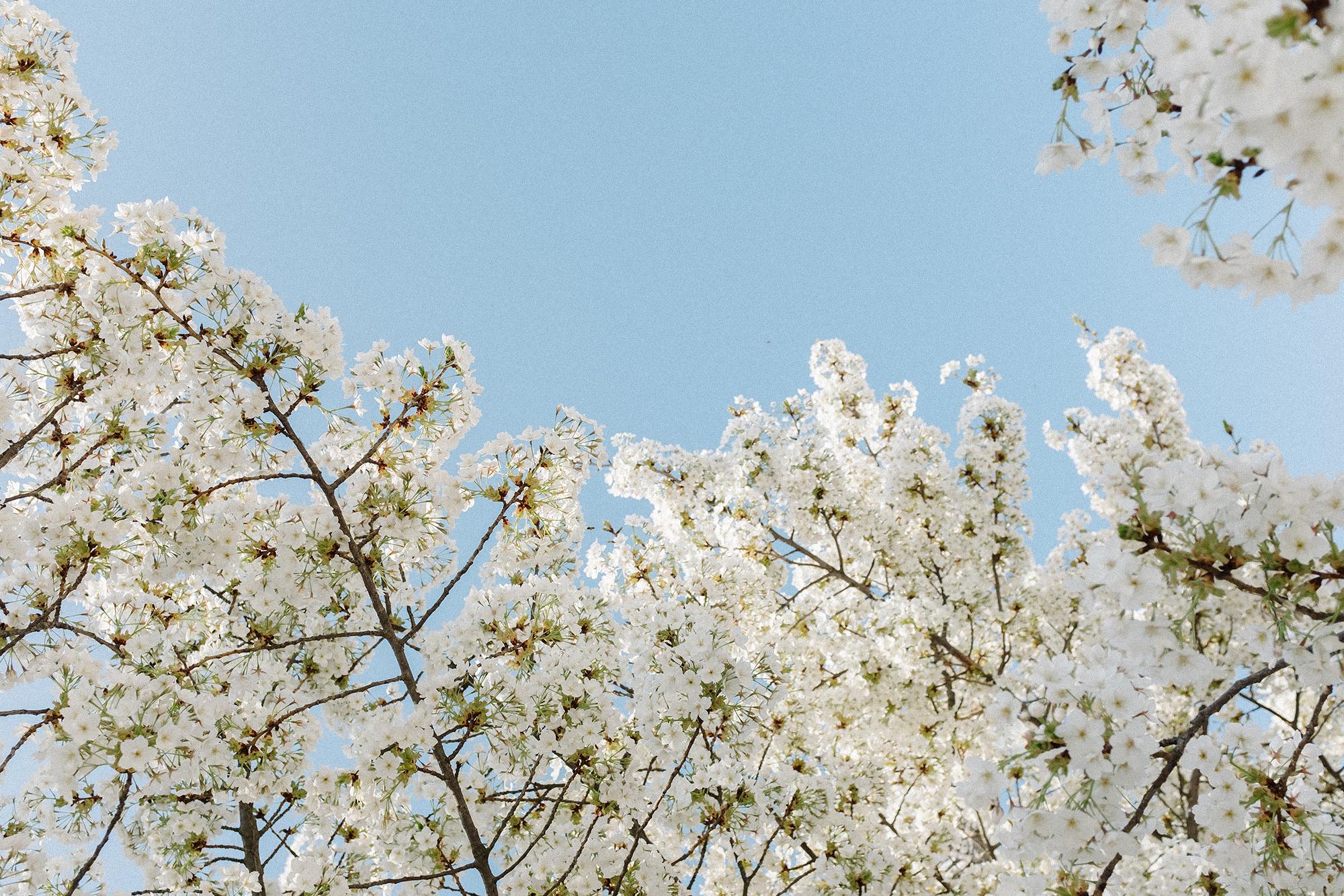 Paris_Spring_CarinOlsson01.jpg