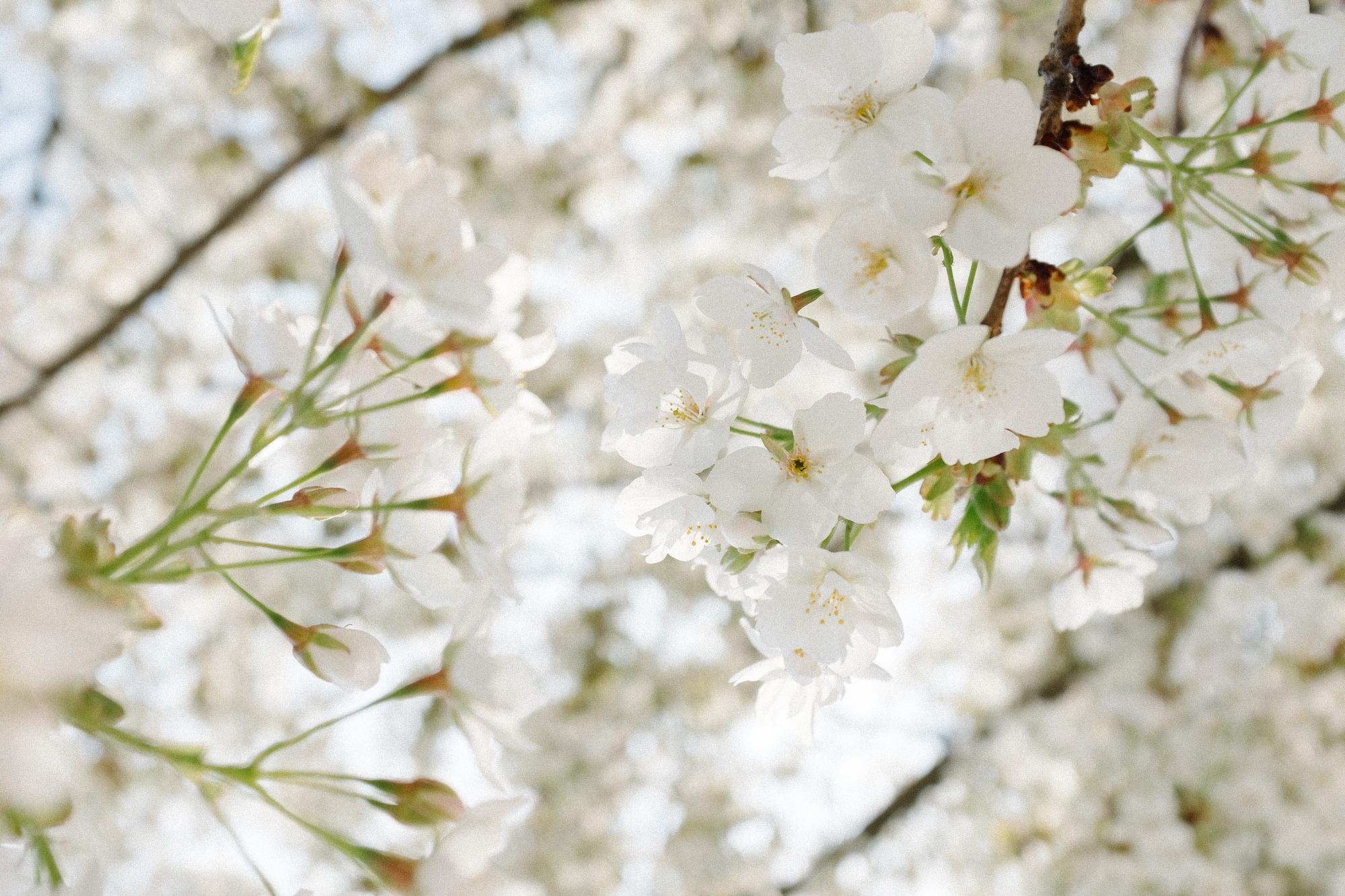 Spring_Paris_CarinOlsson03.jpg