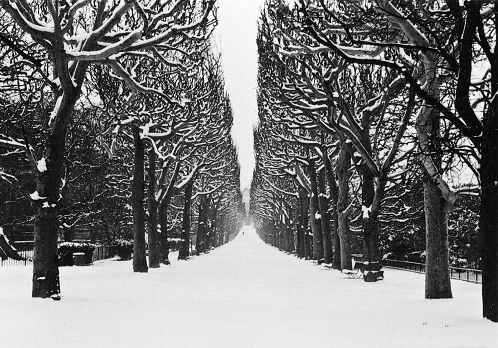 Jardin des Plantes, Paris, 2013