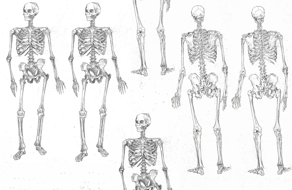 skeleton layers small.jpg
