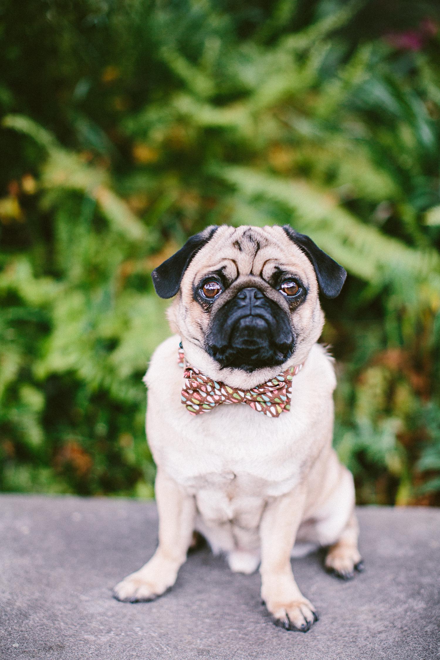 oh-jaffa-bow-ties-dog-collars