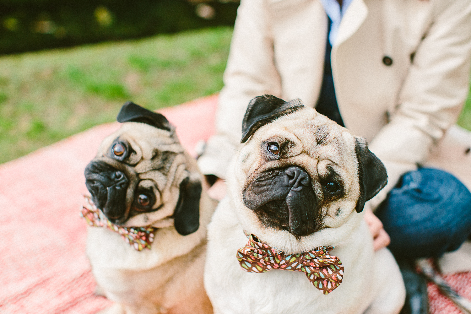 twoguineapigs_pet_photography_oh_jaffa_picnic_pugs_1500-3.jpg