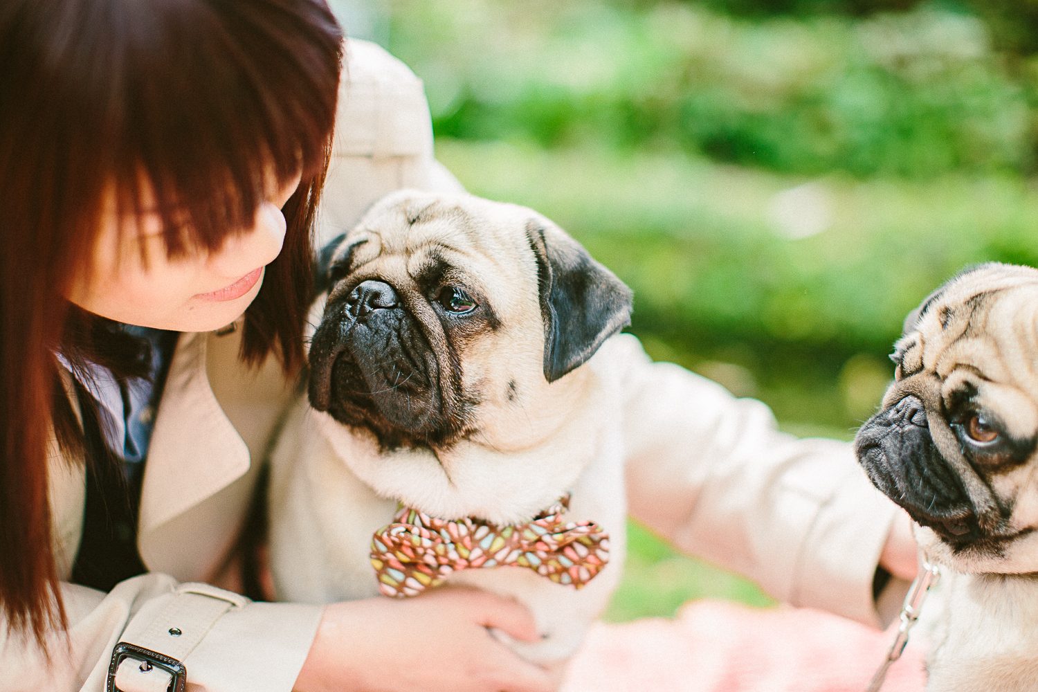 twoguineapigs_pet_photography_oh_jaffa_picnic_pugs_1500-4.jpg