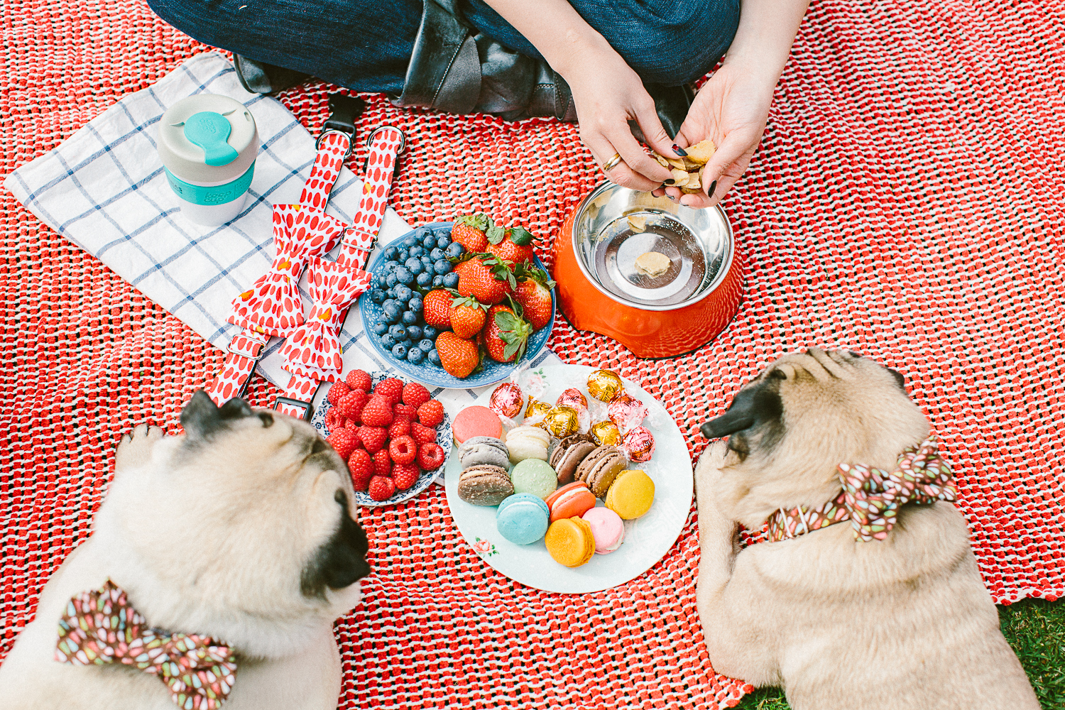 twoguineapigs_pet_photography_oh_jaffa_picnic_pugs_1500-14.jpg