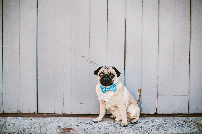 oh-jaffa-bow-ties-dog-collars-blue-sticks