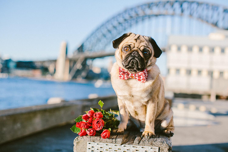 oh-jaffa-bow-ties-dog-collars-red-polka-dots