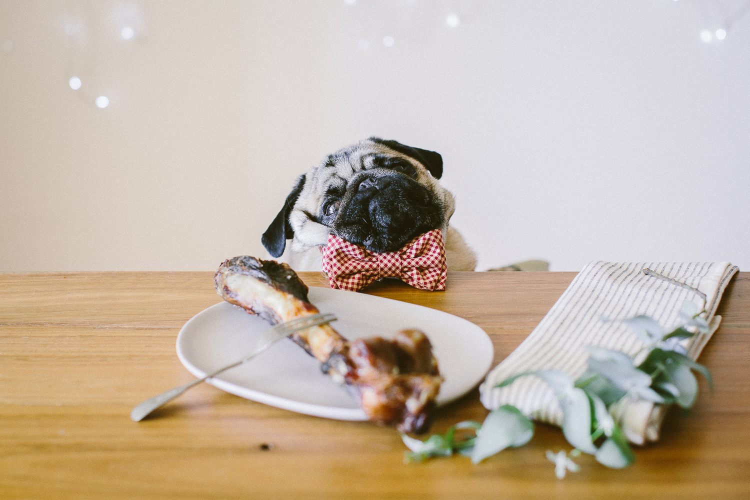 © twoguineapigs_jkblackwell_ohjaffa_christmas_bowtie_collection_WEBSITE-23.jpg