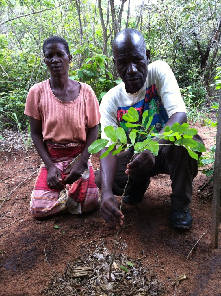 Community - Young saplings - a source of income.