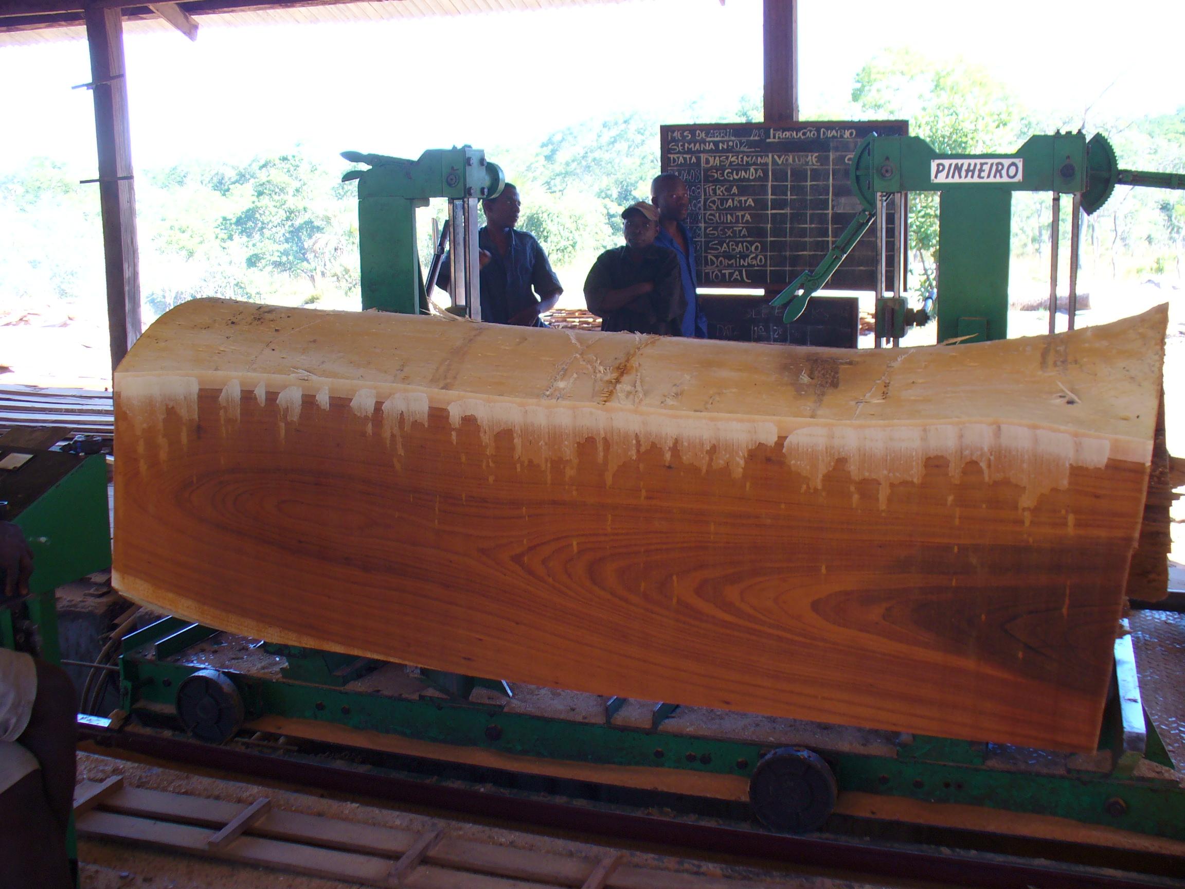 Masasa log on the saw
