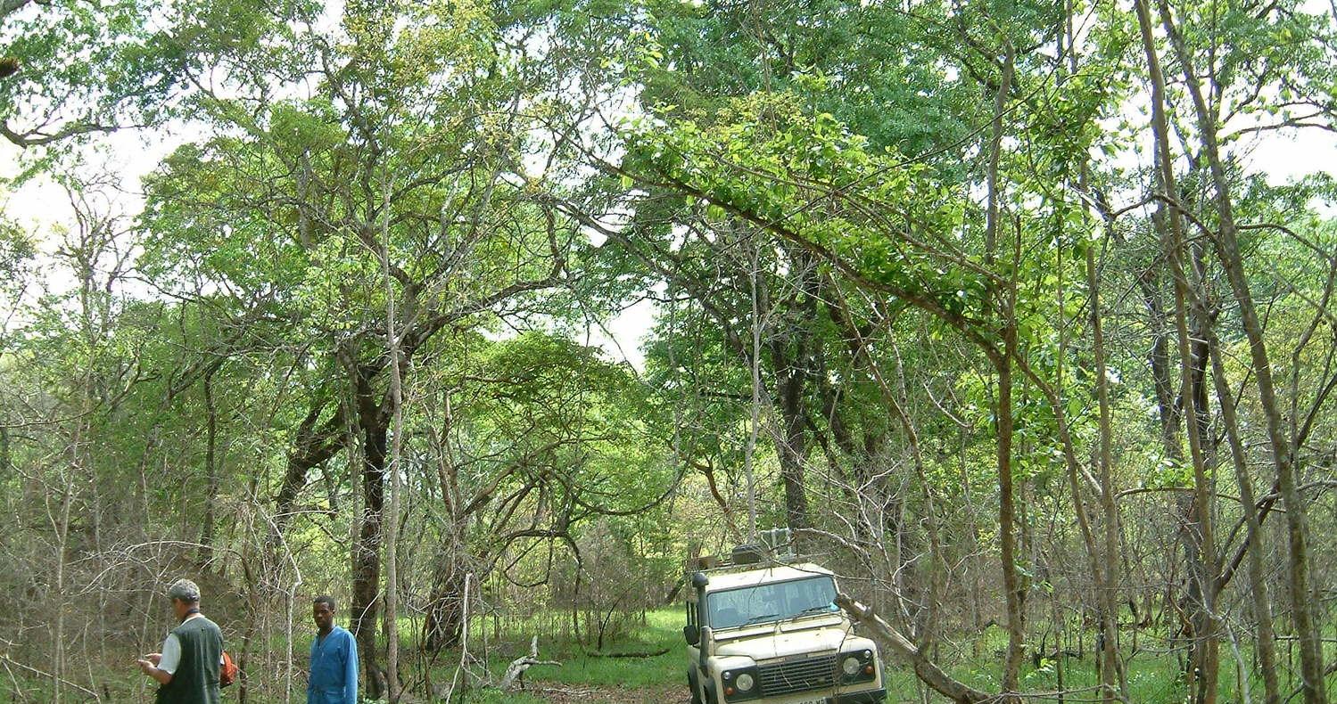 Masasa Forest