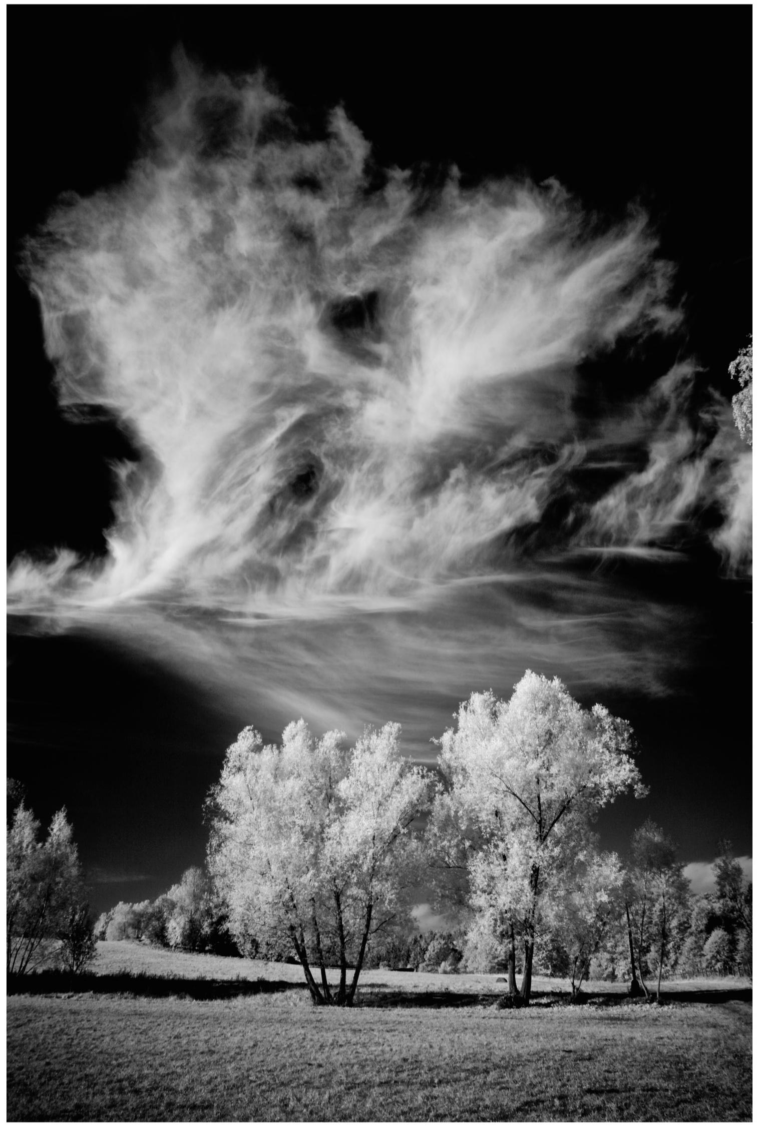 © Ron Rosenstock Photography IC010