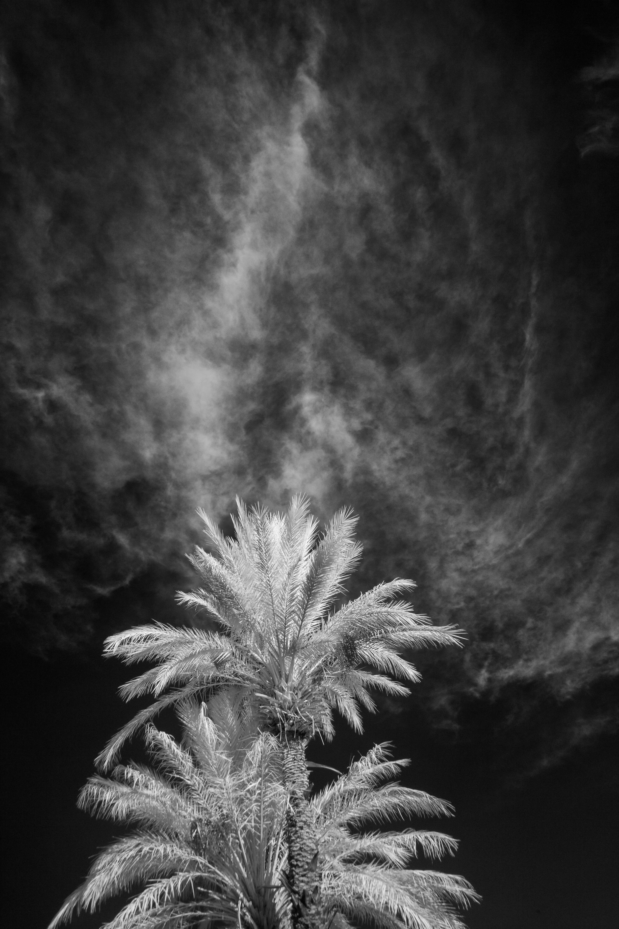 © Ron Rosenstock Photography