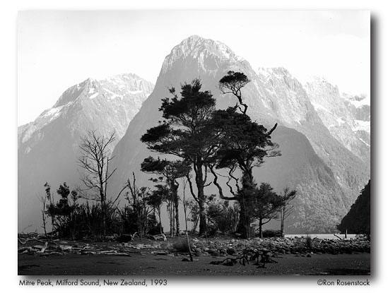 New Zealand galb4.jpeg