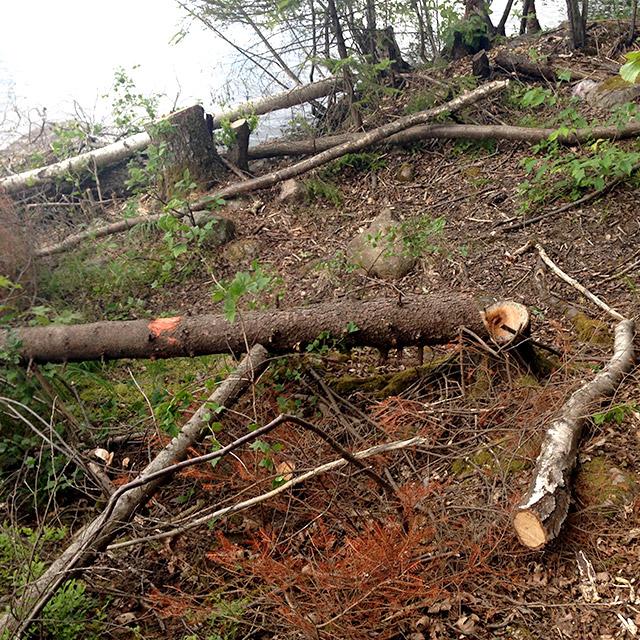 Och det kändes ju sådär att de till och med huggit ned träden med ledmarkeringarna på...
