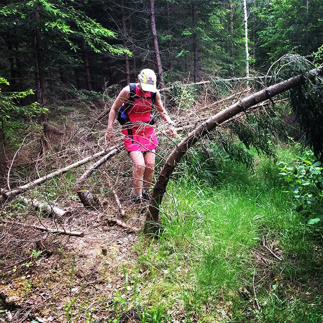 Och ibland rätt svårt att hålla uppe tempot när någon gjort en hinderbana av stigen.