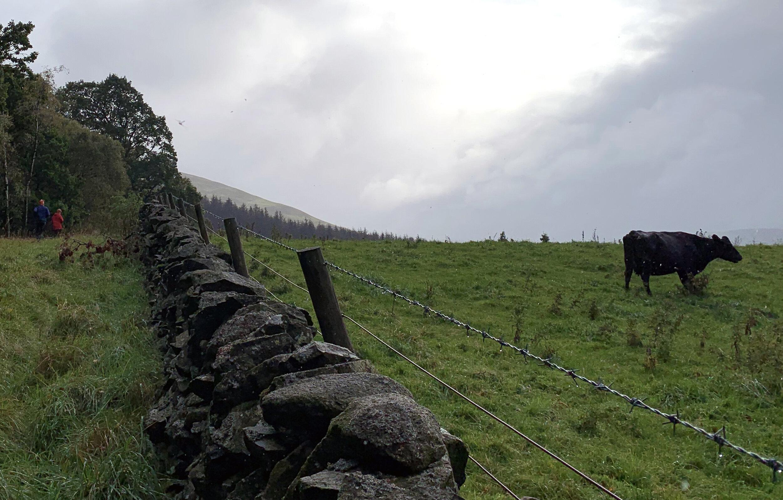 Kor och får