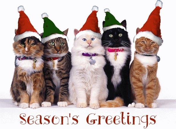 funny-cat-christmas-cards.jpg