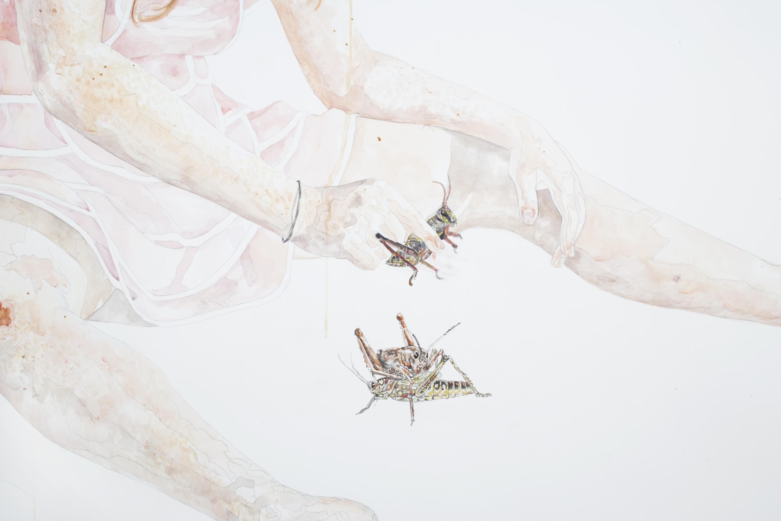 HD Grasshopper detail 1.jpg