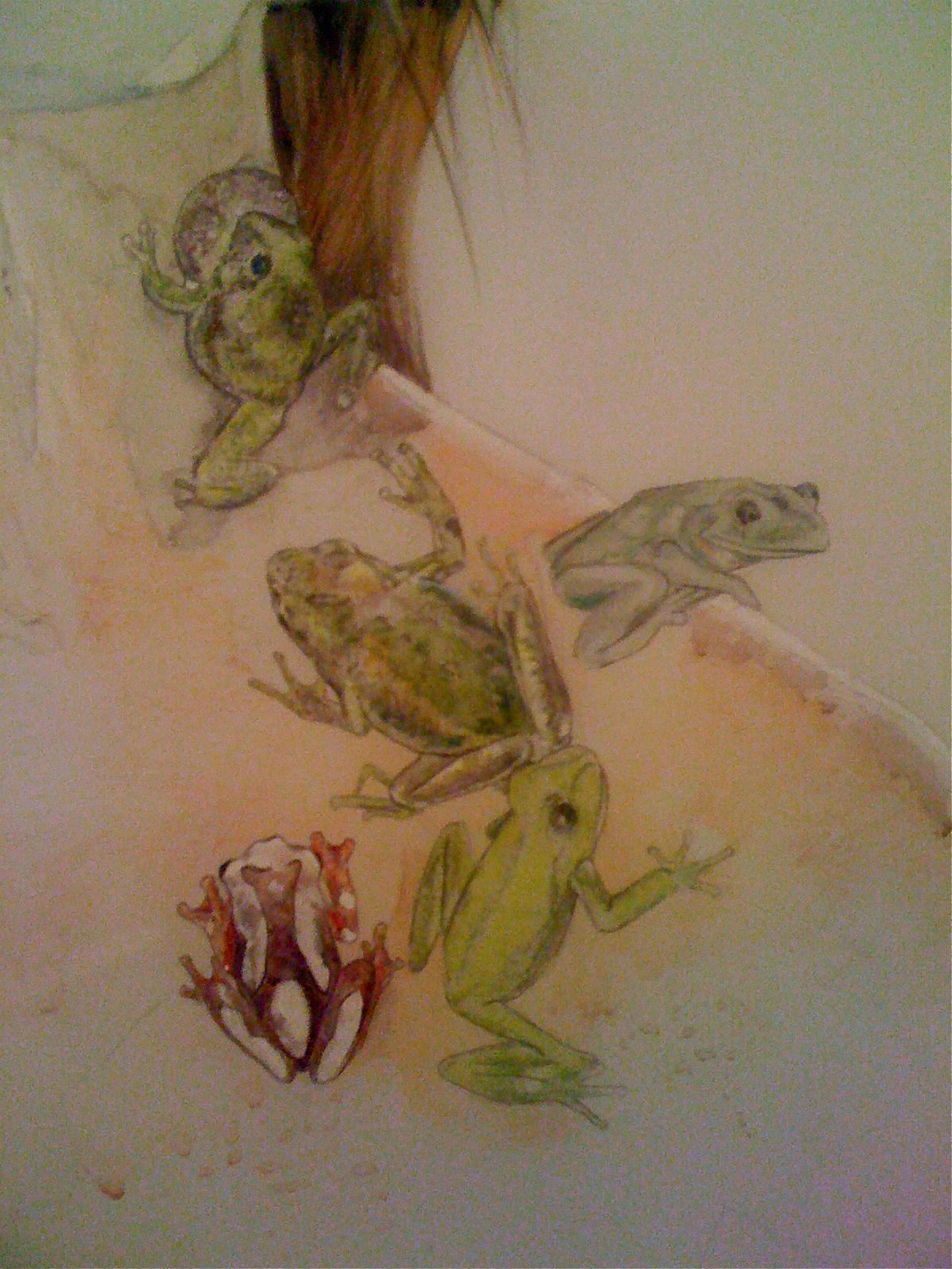 Tree frogs.jpg