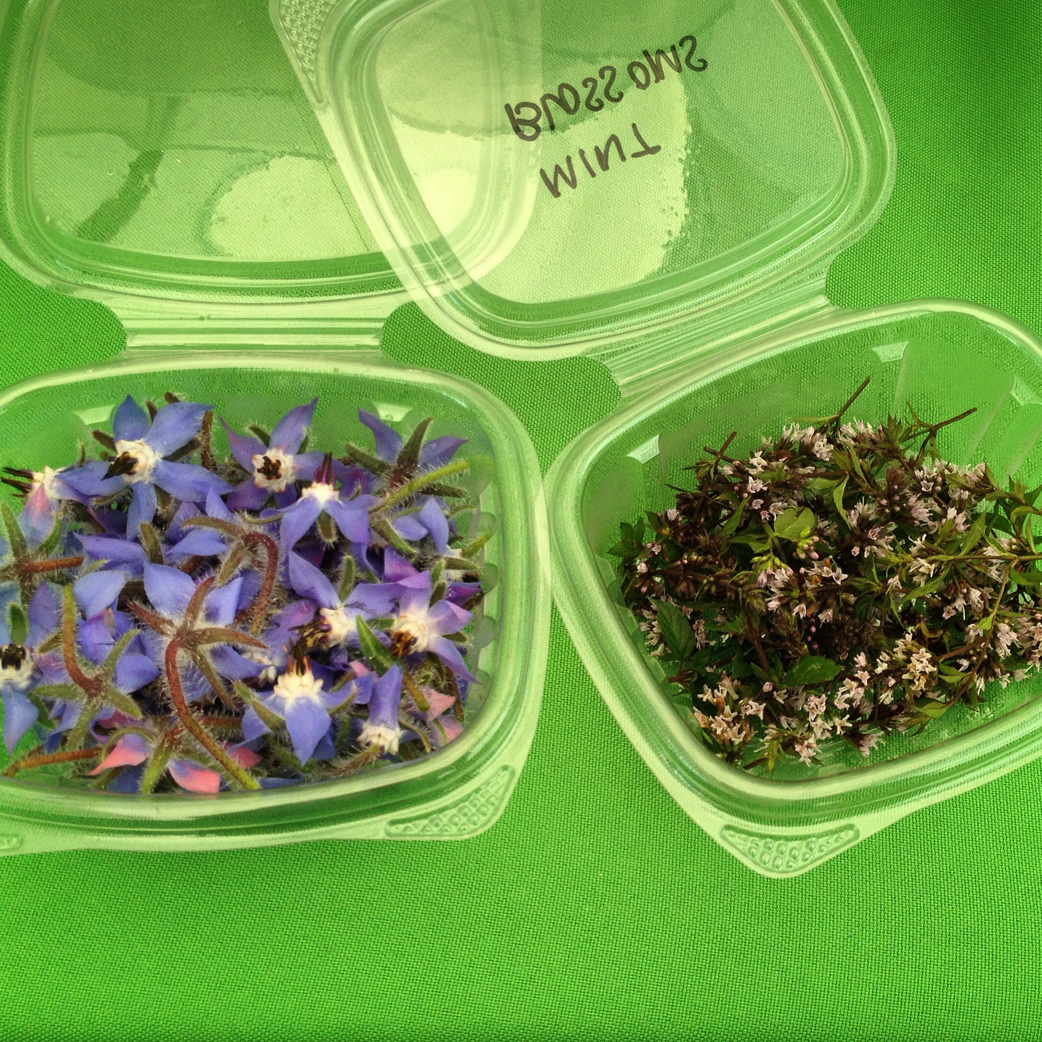 From left to right: Borage and Chocolate Mint Blossoms