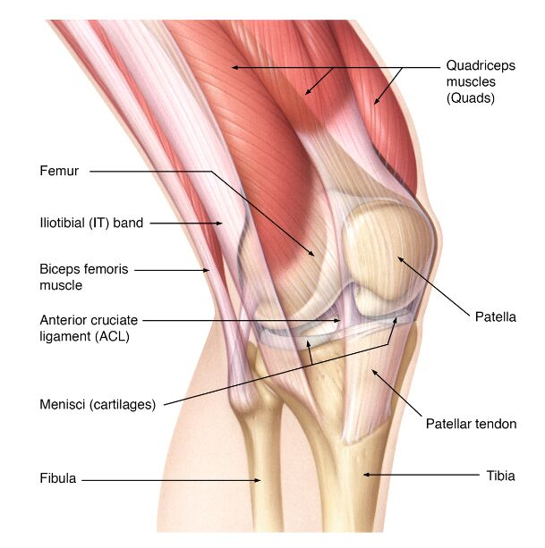 Source: https://coreem.net/core/patella-tendon-rupture/