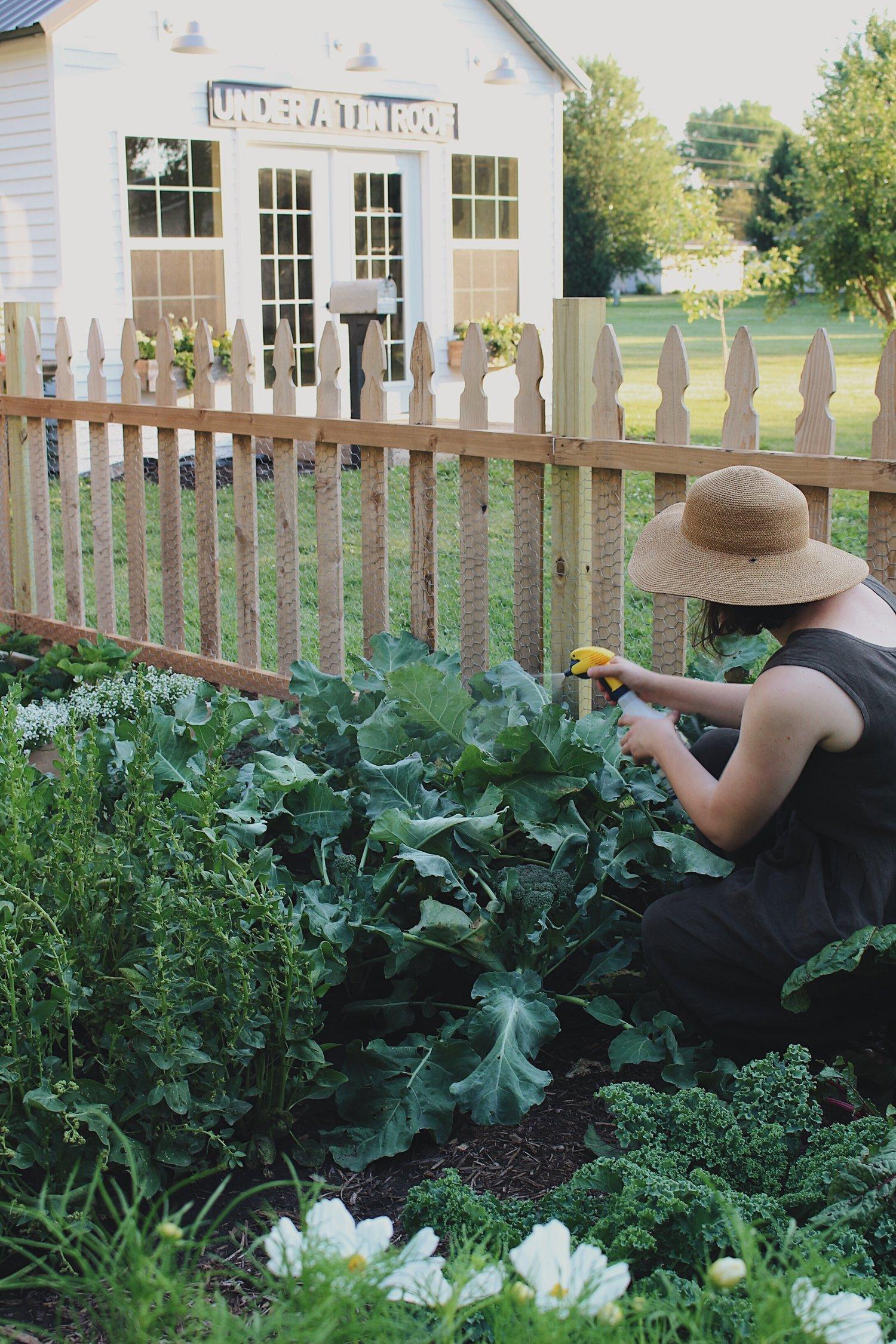Organic Pest Control + DIY Recipes