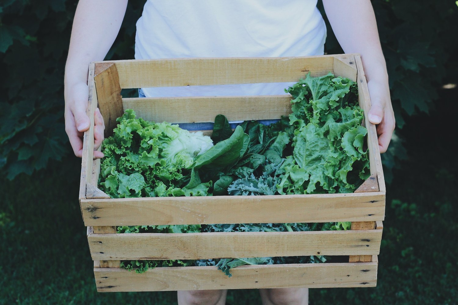 10 Homesteading Skills You Can Use Without the Homestead - Under A Tin Roof Blog