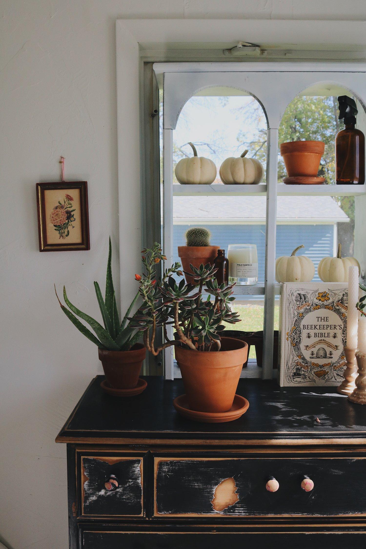 Succulent Care Simplified