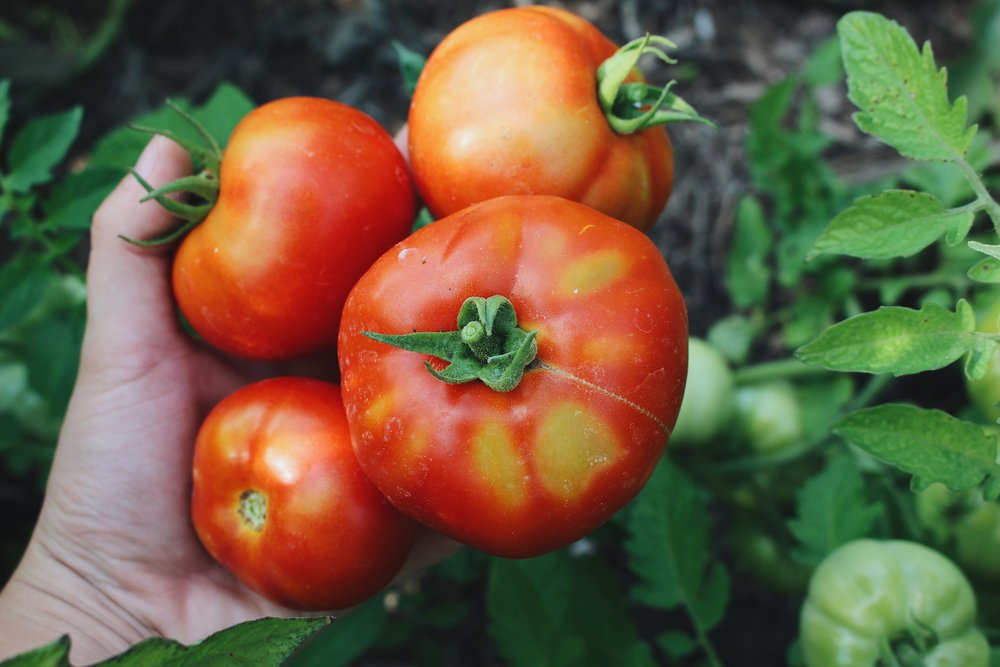 Monthly Homesteading Guides for the Beginner - Under A Tin Roof Blog