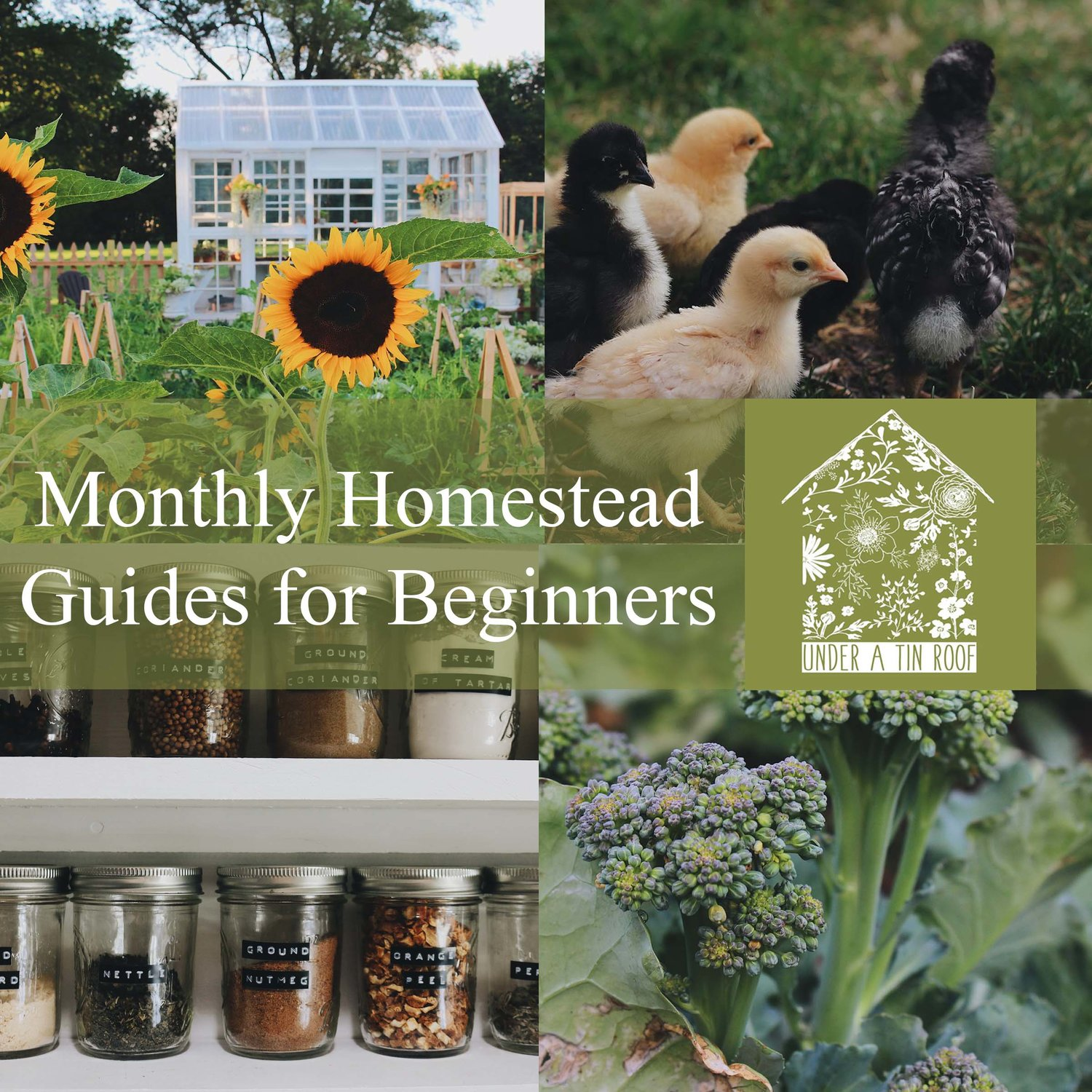 Monthly Homestead Guides for Beginners