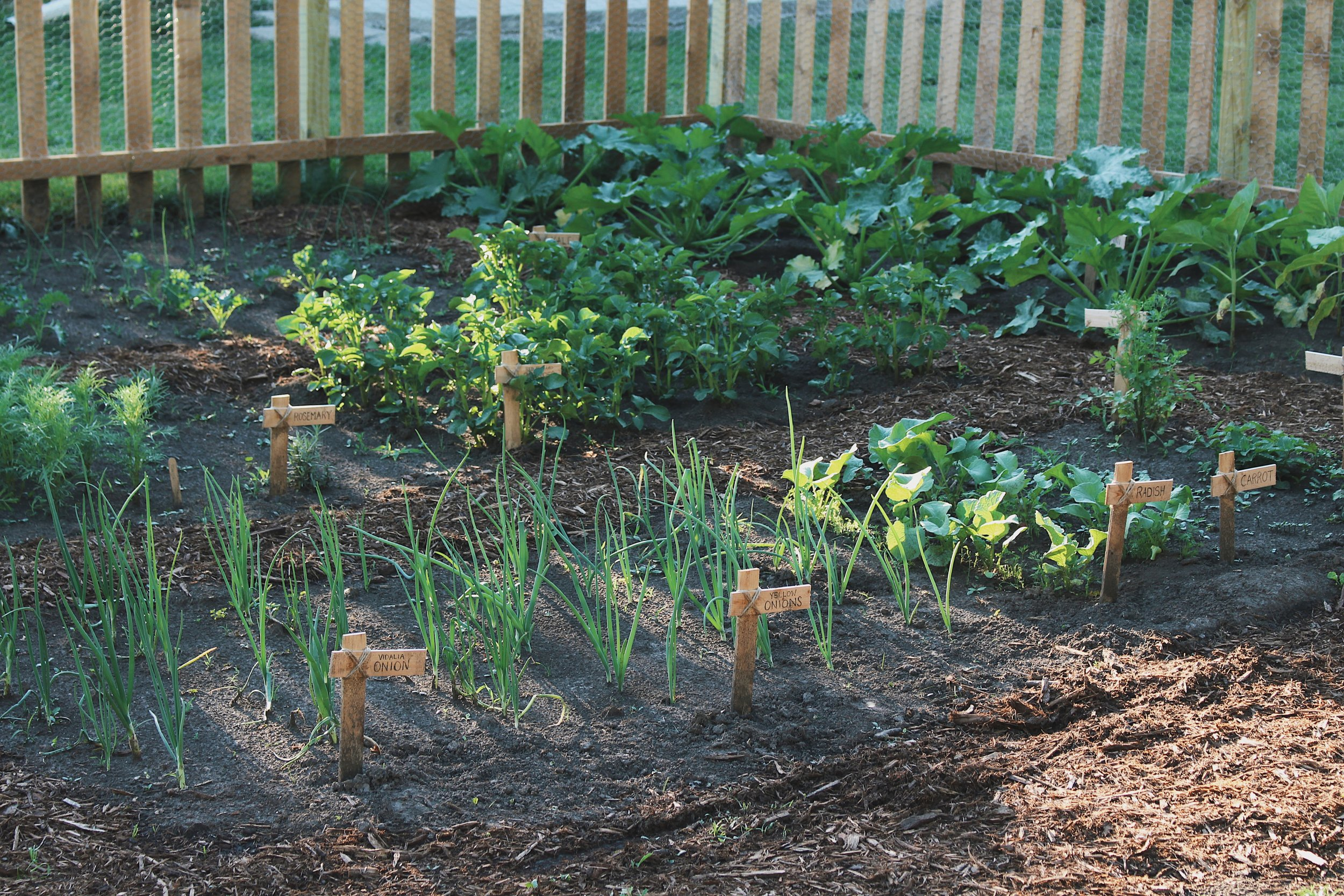 10 Things I've Learned After Homesteading For One Year - Under A Tin Roof Blog