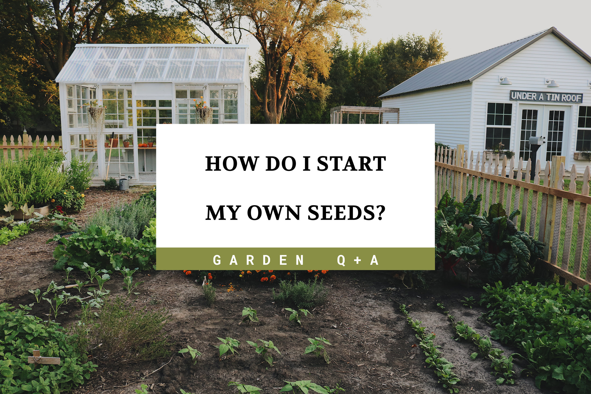 Garden Q + A:  How Do You Care For Seedlings? - Under A Tin Roof Blog