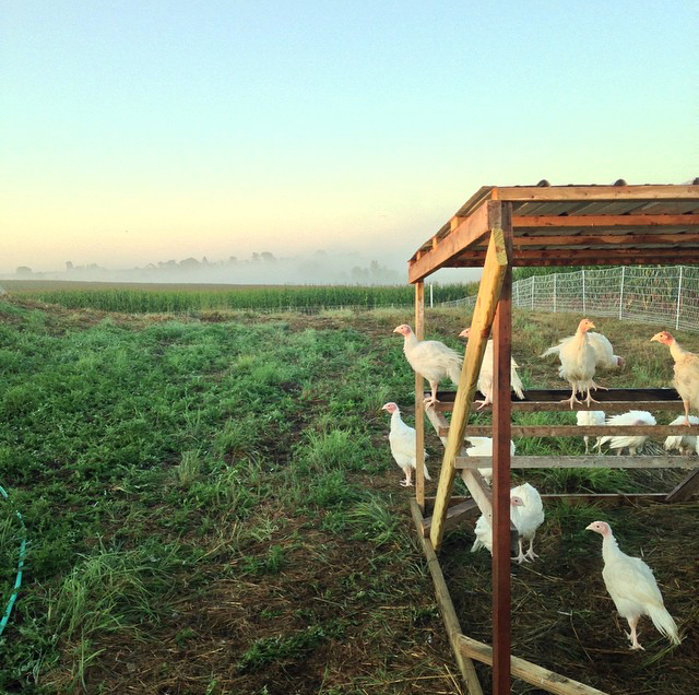 All About Wild Farm's Meats! - Under A Tin Roof Blog